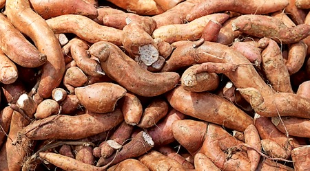 starchy food: root crop vegetable sweet potato