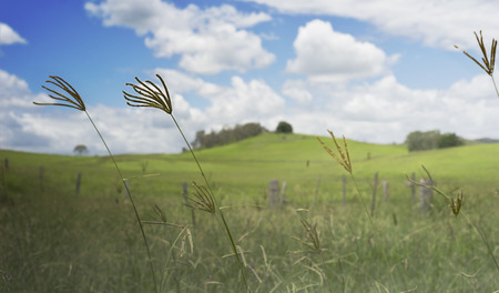 windy day: Dull Cloudy Windy Day in a country scene with long grass, clouds and blue sky Stock Photo