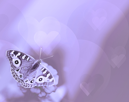 sympathy: Butterfly with hearts on purple background for sympathy and symbol of life hope soul and resurrection Stock Photo