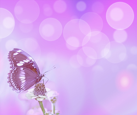abstract purple bubbles and butterfly card background symbols for life hope love or loss Stock Photo