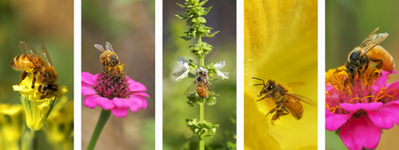 Panoramic nature montage with set of bee photo elements in white frame Reklamní fotografie