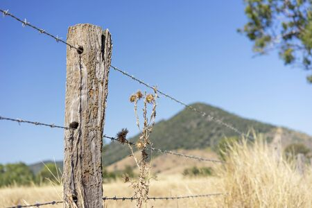 Barbed wire or bobbed wire fence with wooden fence post on agriculture farmland in Queensland Australia