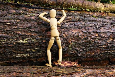 predecessor:  Wood doll climbing a tree