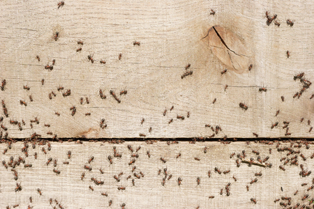 manage transportation: Ants transporting things in the nest Stock Photo