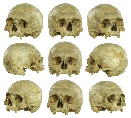 Nine angles of a real human skull, isolated on white.