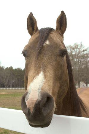 Bucksking horse greeting visitors