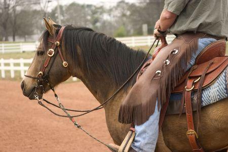 Quarter Horse stallion under western tack Banco de Imagens