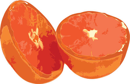 Vector grapefruit halves Çizim
