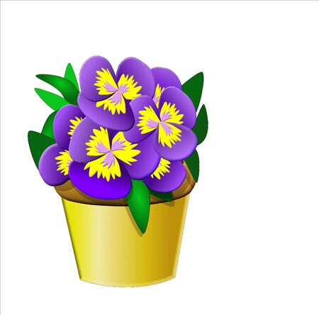 Pretty pot of purple Pansies in a yellow pot. Background is on a work path Reklamní fotografie