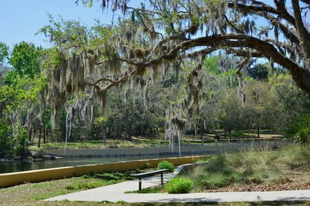 gallons: Salt Springs in Ocala National Forest are ancient subterranean springs which flow year round at a constant temperature of 72 degrees and pump about 53 million gallons of crystal clear water per day.