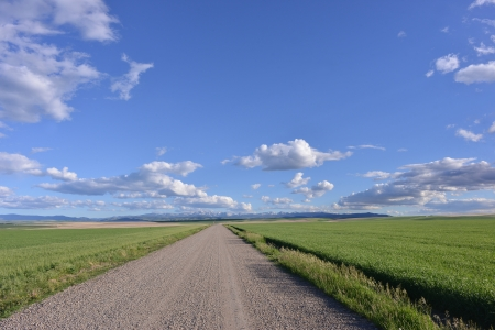 america countryside: Gravel road with wheat field and the mountains of Gallatin National Forest, Montana