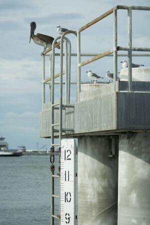 Water level measure in Galveston Bay, Texas. Stock Photo - 23322345
