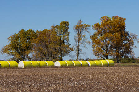 Large round cotton bales on a rural farm in Tennessee with trees in fall foliage. photo