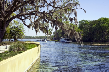subterranean: Salt Springs in Ocala National Forest are ancient subterranean springs which flow year round at a constant temperature of 72 degrees and pump about 53 million gallons of crystal clear water per day.