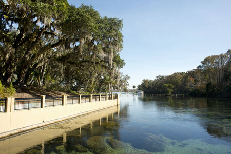 national forest: Salt Springs in Ocala National Forest are ancient subterranean springs which flow year round at a constant temperature of 72 degrees and pump about 53 million gallons of crystal clear water per day  Stock Photo