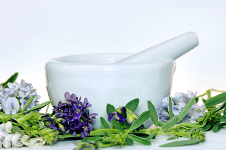 medicago: Mortar and pestle with alfalfa leaves and flowers.