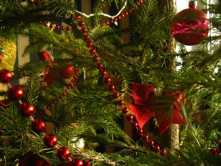 An einem echten Weihnachtsbaum wachsen grüne hellgrüne Nadeln. Der Weihnachtsbaum ist mit roten Perlen, Schleifen und Glaskugeln geschmückt. Wunderschöner eleganter Weihnachtsbaum glitzert und schimmert im natürlichen Sonnenlicht. Standard-Bild