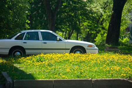 An old white retro vintage car parked near a lawn with a huge amount of yellow dandelions on a sunny day. Stock Photo