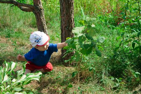 Little baby boy sitting on the ground and studying the plants around. Curious charming child pulls the arm to the leaf on a tree branch.