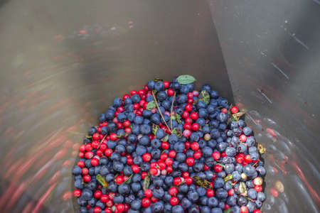 Blue and red blueberries and lingonberries collected in a gray bucket. A container with the harvested harvest of bright forest berries.