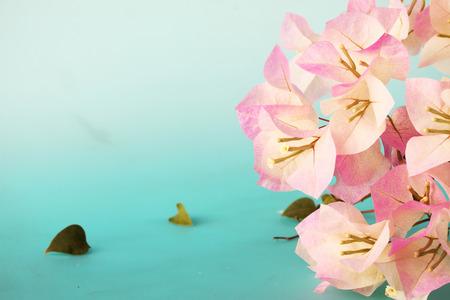 bougainvilleas: vintage bougainvilleas flowers