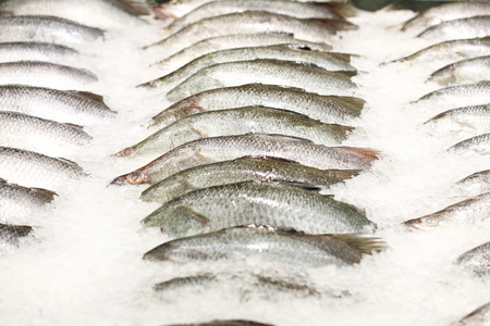 grey mullet: fish on ice at the market Stock Photo