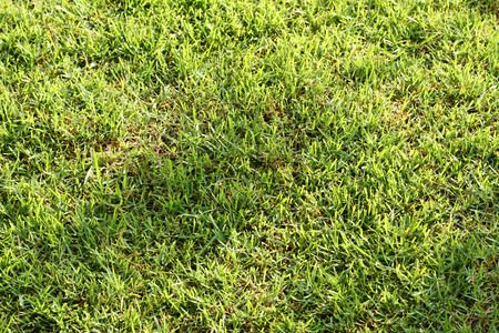 grassplot: fresh green grass in the garden with sun light, rough background