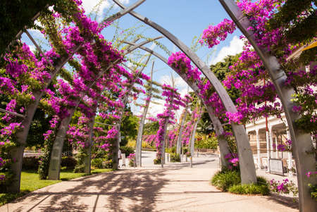southbank: Pink bougainvillea growing on arches at Southbank, Brisbane Stock Photo