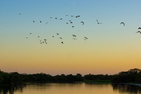 morn: Birds and ducks early morn Kakadu Stock Photo