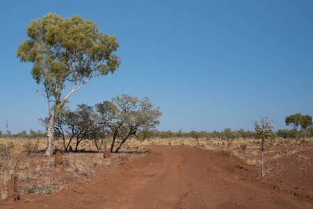 eucalyptus trees: Ant hills, eucalyptus trees and dirt road in outback Queensland, Australia