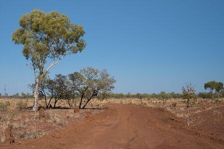 アリ丘、ユーカリの木、クイーンズランド州、オーストラリアのアウトバックの未舗装の道路