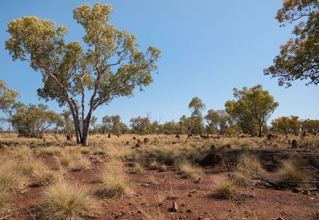 australian outback: Australian outback with gum trees, ant hills and red soil