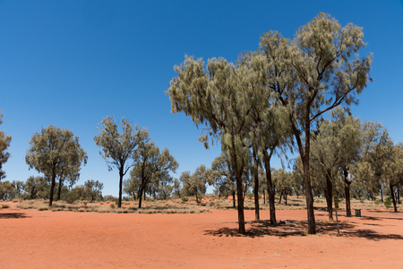 outback australia: Red soil in outback Australia with grass and trees Stock Photo