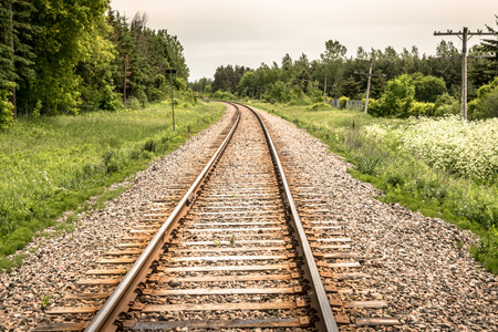 Railway tracks going into the distance with dense woods on either side