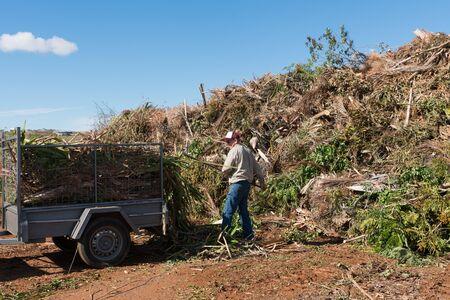 ワーカー アンロード トレーラー庭の切断やコレクションのサイトを拒否する木