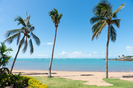 Tropical Airlie Beach, Australia, with blue skies, blue water and palm trees