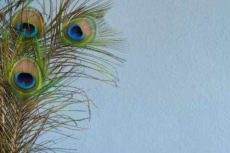 Blue rendered wall background with peacock tail feathers border Archivio Fotografico