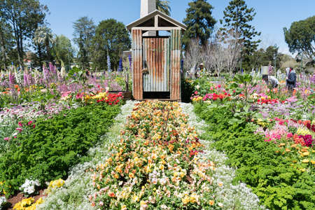 Novelty garden display of pansies and parsley in front of a rusty old outback toilet / dunny in Queens Park, Toowoomba, during the Carnival of Flowers