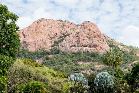View of Castle Hill from Queens Gardens with palm trees in foreground Townsville, Australia