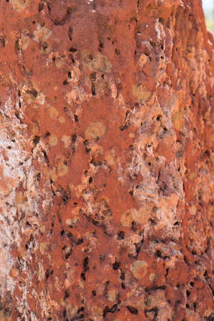 Close up of Laterite karst pinnacles or rock formations formed by erosion near Sawpit Gorge in White Mountains National Park, Queensland