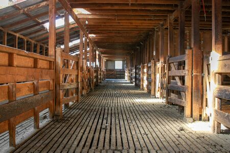 The interior of a wooden shearing shed quiet, tidy and empty, sunlit and waiting for the sheep and shearers to arrive