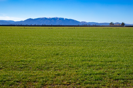 Fresh new pasture grass growing in a farm field