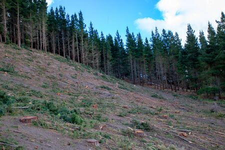 The side of a hill where pine trees have been harvested for timber in rural New Zealand