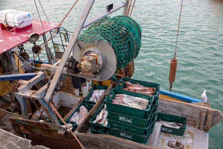 Akaroa, New Zealand - January 7 2019: A fisherman returns with his bins of fresh fish to unload at the wharf