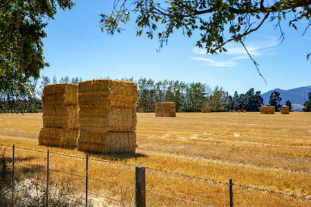 Freshed baled hay stacked in a rural field on a farm in summer, Canterbury, New Zealand