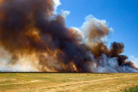 A stubble fire or burn-off creates a huge smoke cloud but is over in a flash on a farm in Canterbury, New Zealand