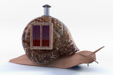 escargot avec la maison sur le dos Banque d'images