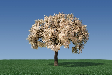 Money tree Imagens