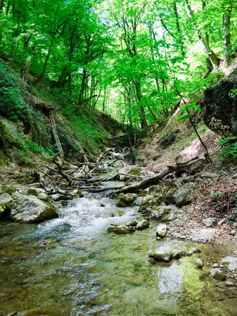 cold mountain creek in the Crimean mountains