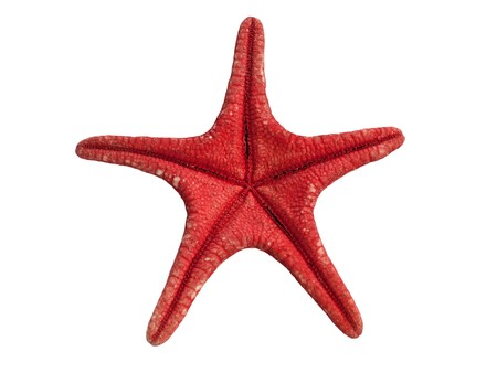 red sea star isolated on white background Stock Photo